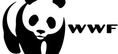 Gîte Panda au Petit Cataine